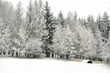Snowbound winter forest in overcast. Beautiful winter landscape