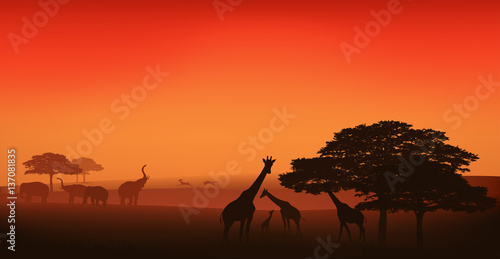 african wildlife editable vector illustration - savannah at sunset