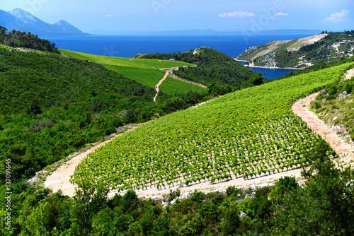 Papiers peints Vignoble Vineyard in Dalmatia, Croatia, at the Adriatic coast