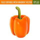 Orange pepper on white background. Vector illustration