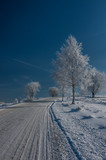 Winter road in the snow, birch trees covered with snow