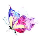 butterfly,watercolor, isolated on a white - 137210094