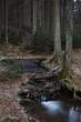 Vereister Bach im dunklen Wald