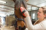 Pferd - Hannoveraner - wird liebevoll gepflegt von junger Frau - 137227058