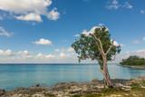 Seascape. Bay. Tree on a coral seashore
