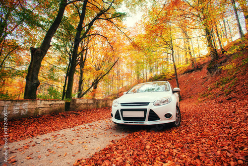 Papiers peints Brique car on a forest path. Landscape. Ukraine. Europe