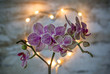 Orchid and Lights
