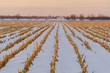Farmland in rural Ottawa, Canada with remnants of corn plants partially covered by snow