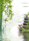 composition aquatique, lotus, bambous, papillon, galets