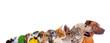 Leinwanddruck Bild - Reihe unterschiedliche Haustiere – Köpfe im Profil