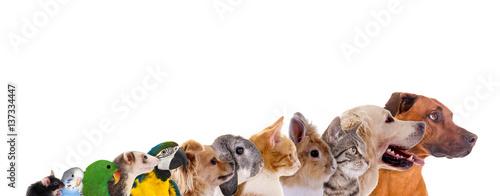 Leinwanddruck Bild Reihe unterschiedliche Haustiere – Köpfe im Profil