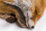 isolated background fox fur