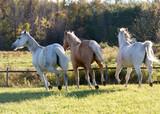 Running Horses, Ontario, Canada, 2015