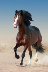 Koń na pustyni