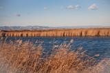 Landscape in reeds