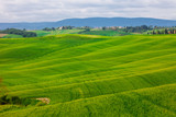 summer rural landscape with wavy hills in Tuscany