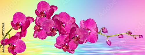 Foto op Aluminium Roze Colorful bright orchid flowers on a background of the summer landscape.