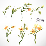 Yellow flowers and leaves, watercolor, can be used as greeting card, invitation card for wedding, birthday and other holiday and  summer background. Vector illustration. - 137454683