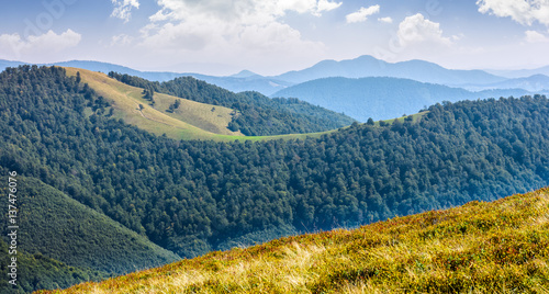 grasiger Abhang auf Berg im Sommer