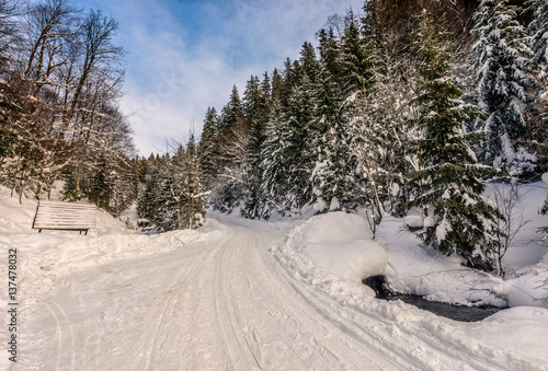 snowy road through spruce forest