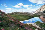 Lago alpino con rododendri