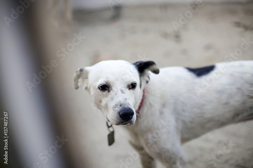 Poster cane che fa la guardia