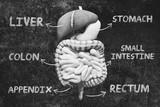 Organi anatomici umani, fegato, intestino e stomaco malati