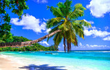 exotic tropical beach from dreams. Palm over turquoise sea