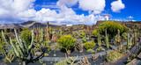 Garden of cactus - touristic attraction in Lanzarote. Canary islands