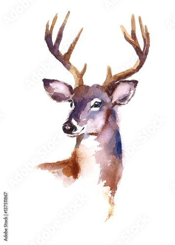 Watercolor Deer Hand Painted Illustration isolated on white background - 137511867