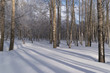 Winter Forest or Park in Snow