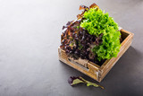 Head of fresh organic lettuce salad on old wooden tray on light gray stone background. Healthy food concept with copy space.