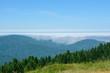 Forest Redwood National Park, California USA