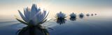 Lotusblüten im Sonnenuntergang - 137602420