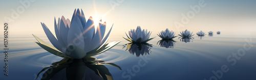 Lotusblüten im Sonnenuntergang