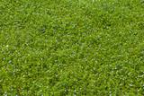 fiorellini di campo-Exposure