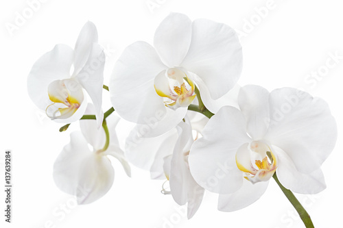 The branch of orchids on a white background - 137639284