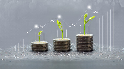 trees growing on coins, business with csr practice, Save and growing finance