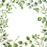 Watercolor floral frame. Hand painted plant card with eucalyptus, fern and spring greenery branches isolated on white background. Print for design or background. - 137672409