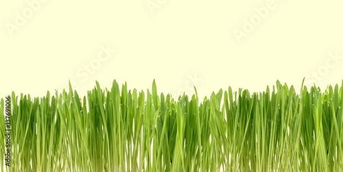 Grüne Pflanzen im eigenen Garten