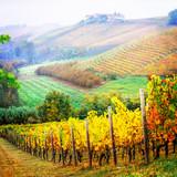 Autumn landscape, vineyards in golden colors, Piemonte vine region of Italy