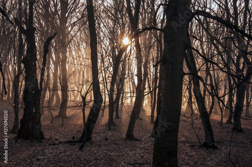 Papiers peints Cappuccino Beautiful landscape of winter forest at Sunset time. Sun light in the misty dead autumn forest. Azerbaijan Gabala Ismailli. Topchu forest