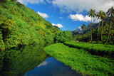 Green landscape of Tahiti - 137703698