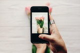 Fototapety instagram photographer, blogging workshop concept. hand holding phone and taking photo of stylish flower flat lay. pink tulips on white wooden rustic background.space for text