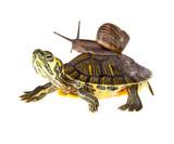 Lazy snail lift on t...