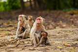 Monkey family in the forest