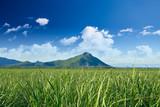 Tamarin Mountain Mauritius