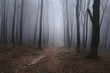 Spooky foggy forest path