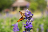 Butterfly on a colorful purple flower,against a blurred background.