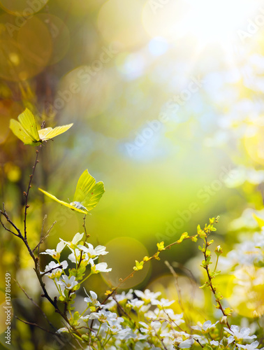 Spring flower and fly butterfly; abstract sunny beautiful Easter background